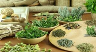 Ποιο ελληνικό βότανο που προστατεύει από καρκίνο και διαβήτη