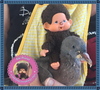 Corentin le petit Kiki et Colombine le bébé pigeon - oisillon -pigeon - gavage - oiseau