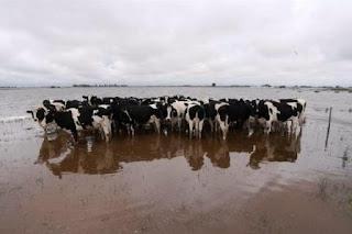 En Carlos Tejedor, en tanto, comenzó a ingresar en las últimas horas el pico de masa de agua que baja del partido de Villegas y compromete a la localidad de Tres Algarrobos e incrementa el caudal de una laguna.