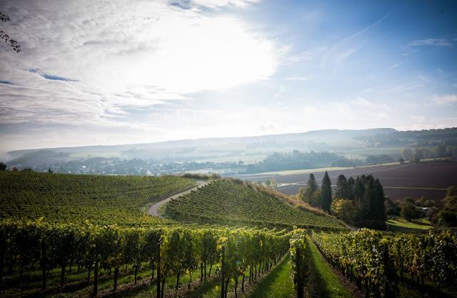 Rheingrafenberg: Weinlage vom Wein- und Sektgut Bamberger an der Nahe