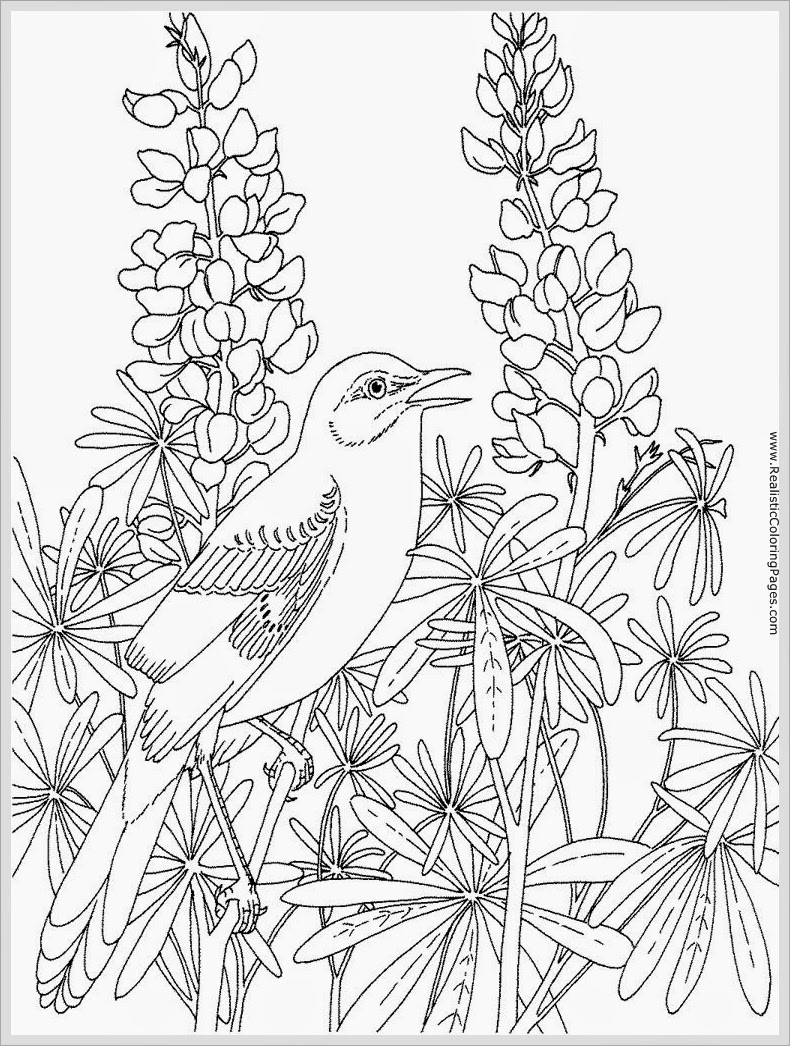 Robin Bird Coloring Pages For Adult | Realistic Coloring Pages