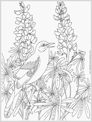 free printable robin adult coloring pages