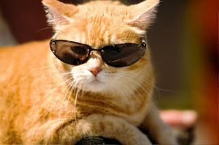 Foto Kucing Lucu dan Menggemaskan