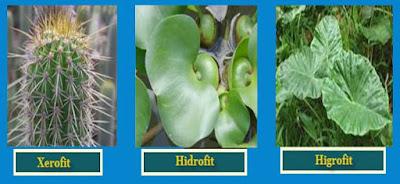Pengertian dan Contoh Adaptasi Morfologi pada Hewan dan Tumbuhan