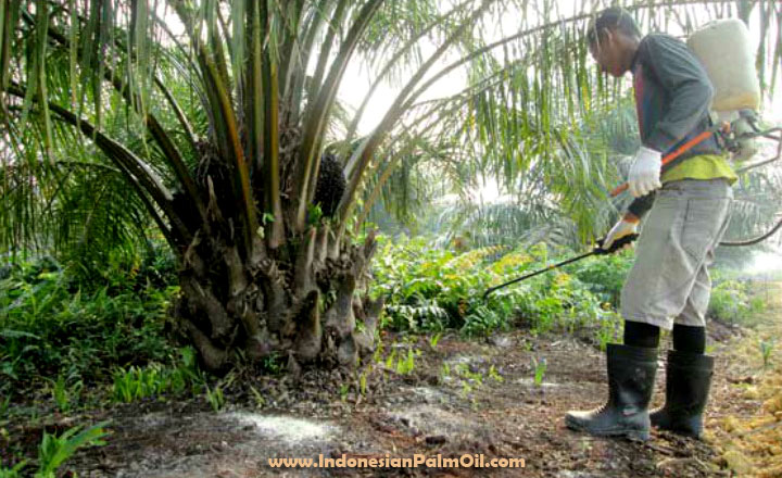 indonesian palm oil pledge disbands