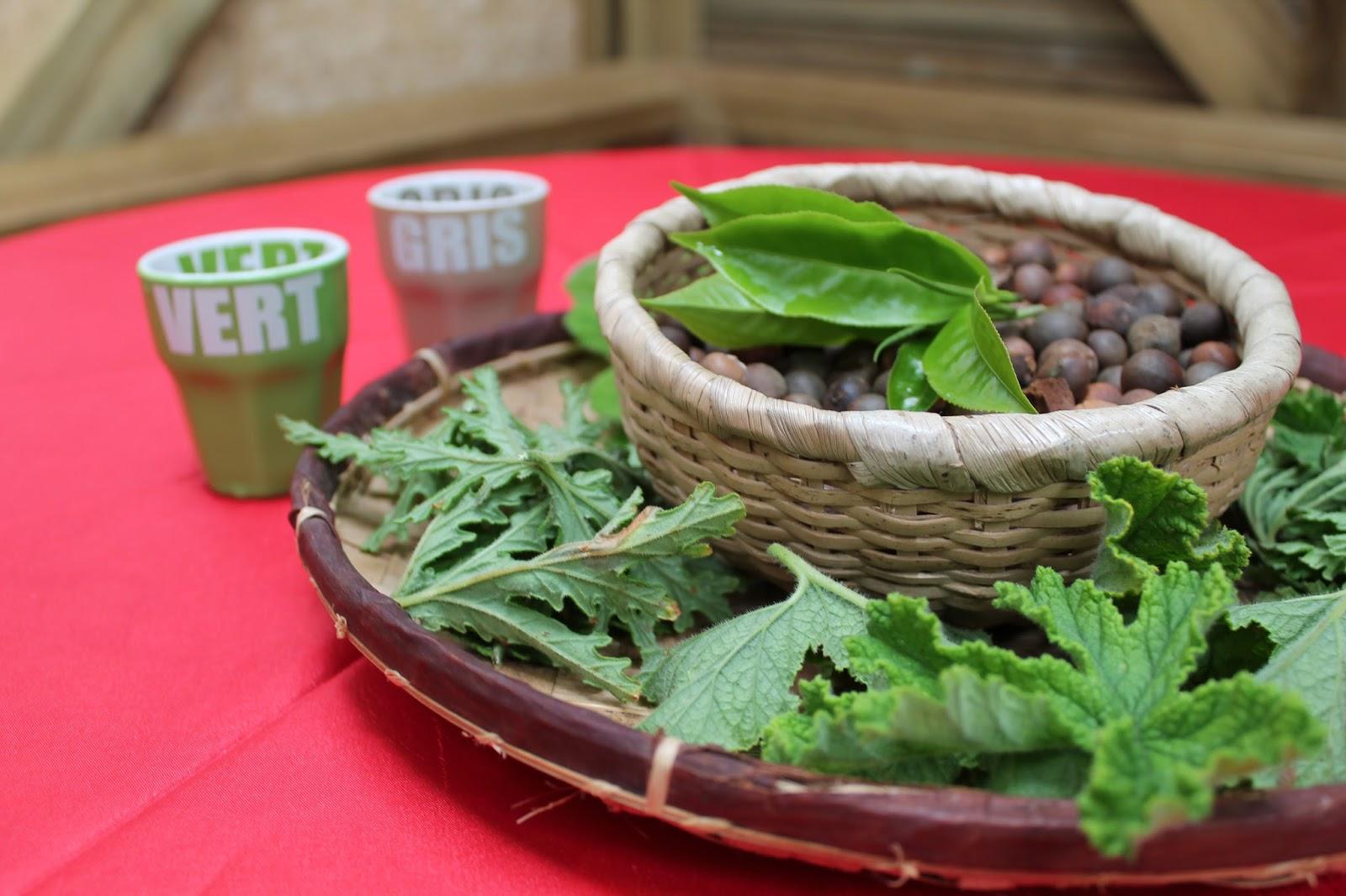 réunion île gotoreunion labyrinthe en champ thé tea grand coude visite à faire jumbocar irt tourisme 974 degustation thé blanc vert geranium rosat