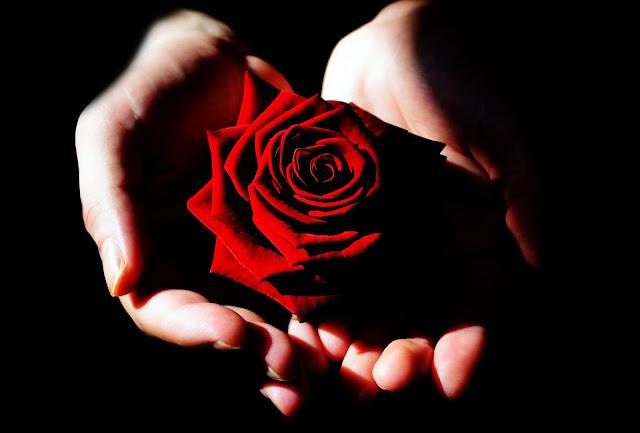 cuidados, nurse, doentes, rosa vermelha