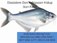 Ekosistem Dan Kebiasaan Hidup Ikan Patin