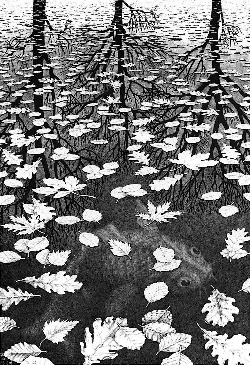Maurits Cornelis Escher carp