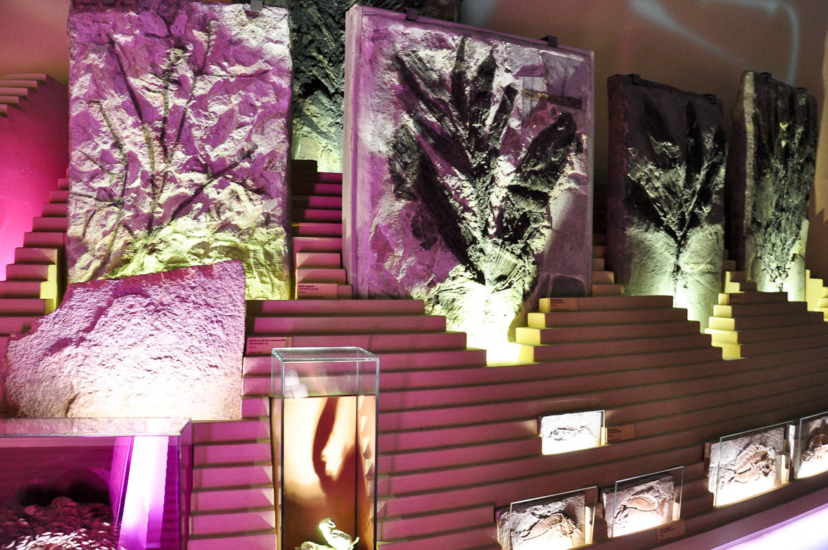 A fossil display bathed in purple light, Natural History Museum, Venice, Italy