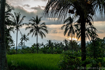 Rizieres-Ricefields-Munduk-Bali