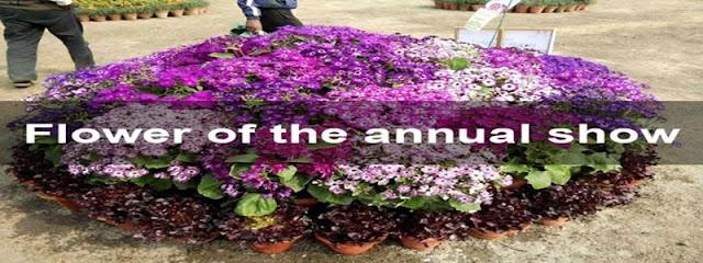 Noida Flower Show 2016 - Basant Utsav