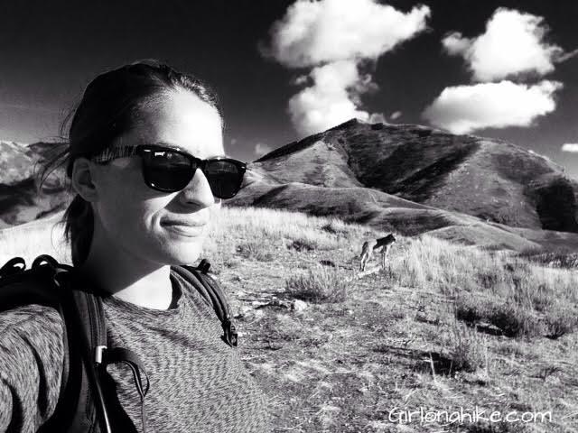 Hiking to Little Black Mountain, Utah, Hiking in Utah with Dogs