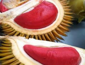 Khasiat Durian Merah dan Jenis Durian yang paling Enak