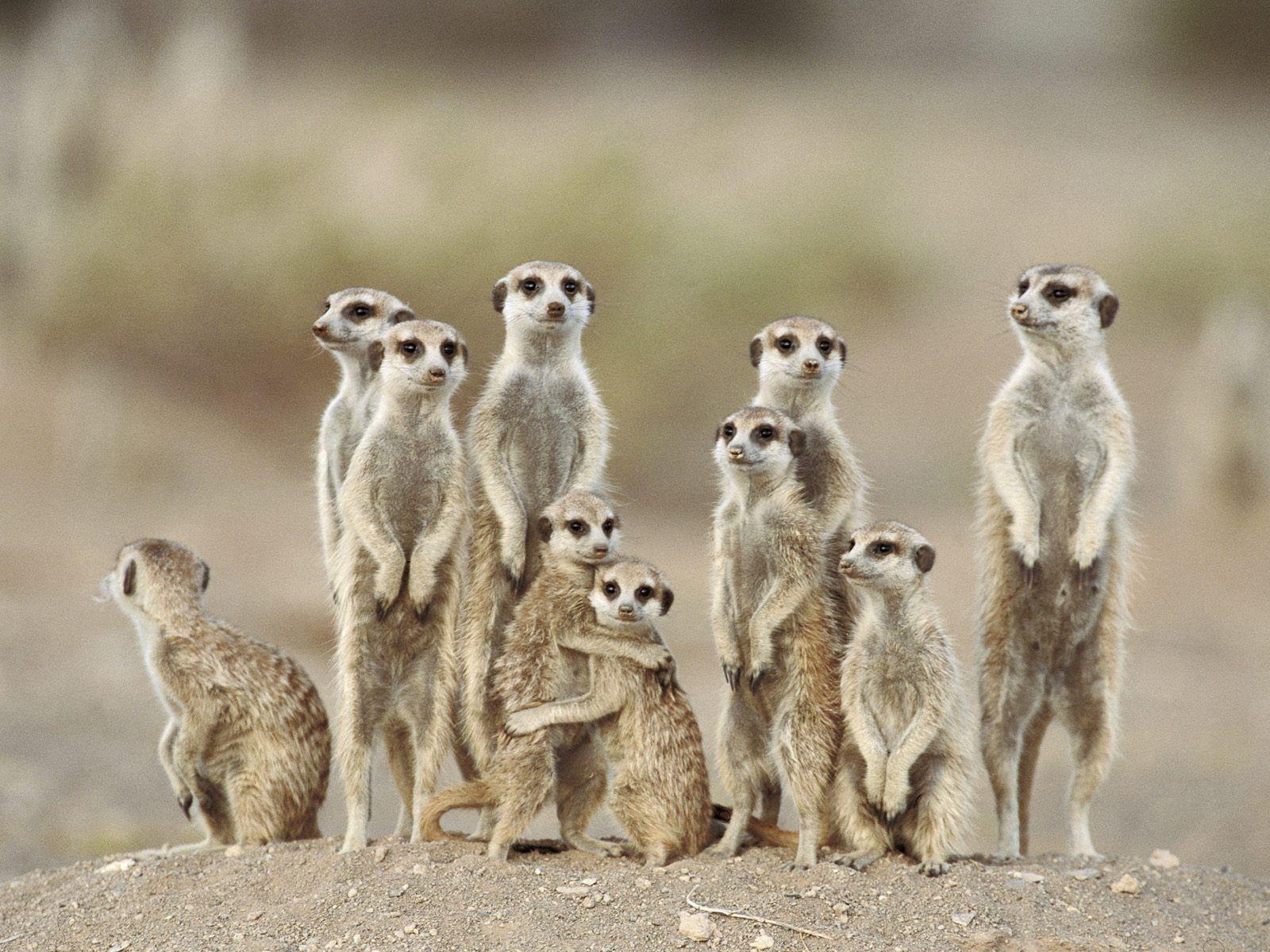 Amazing Wallpapers: Desert Animal Pictures, Deserts