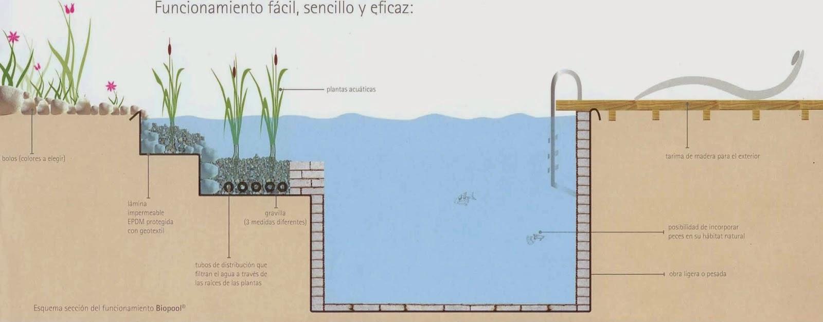 Te invito a leer piscinas naturales for Construir piscina natural ecologica