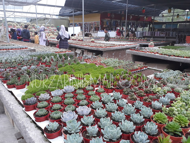 Cactus Point Cameron Highland