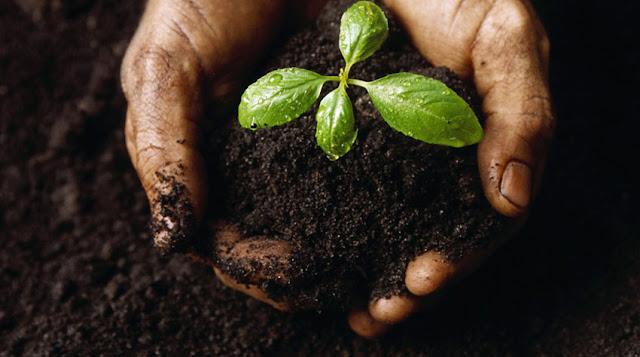 وسائل تحسين الإنتاج النباتي