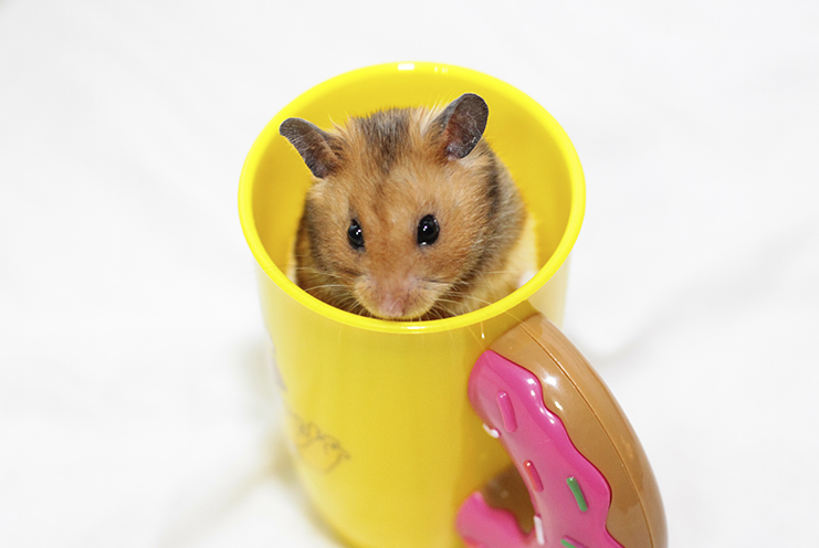 tag-animal-estimação-hamster-nicolymillanez