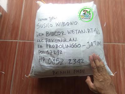 Benih Padi TRISAKTI pesanan SUSILO WIBOWO  (Sesudah Packing)