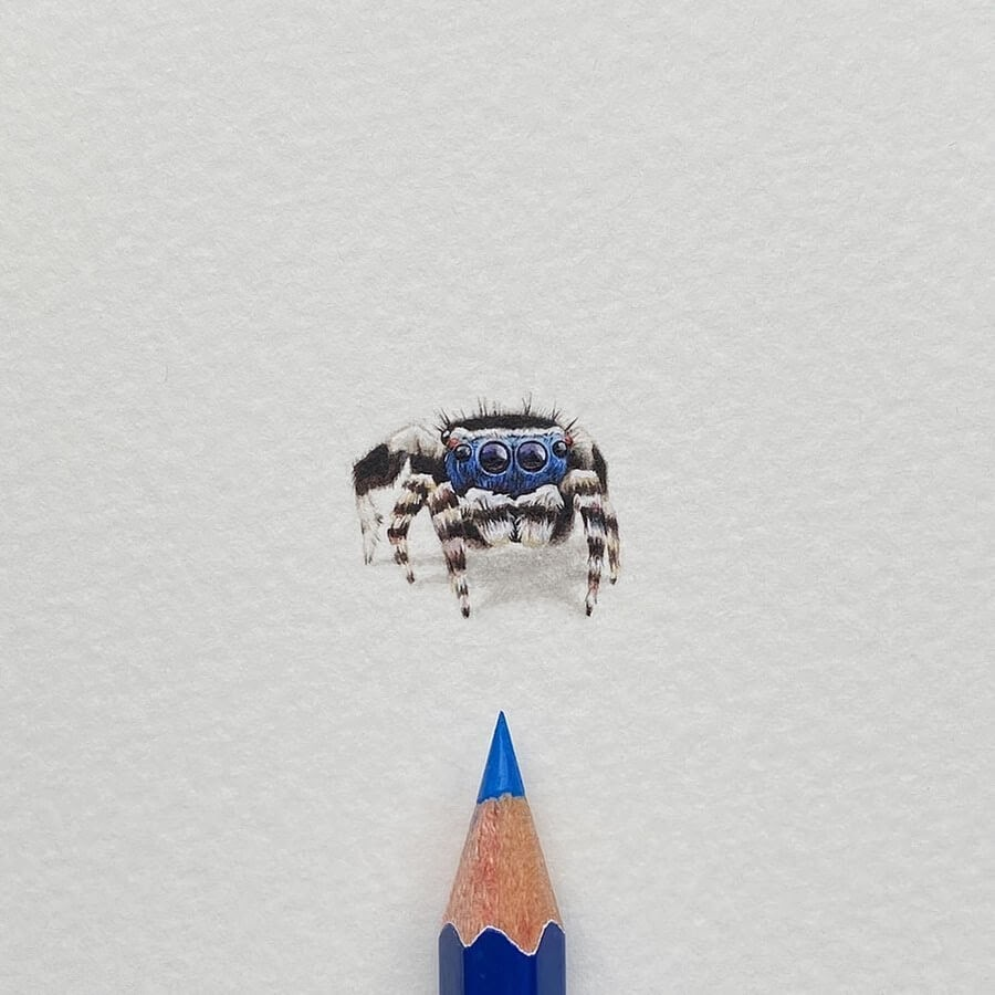 09-Blue-faced-Peacock-Spider-Lorraine-Loots-Tiny-Art-www-designstack-co