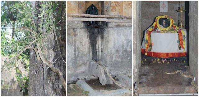 Snake worship shiva in thepperumanallur shiva temple