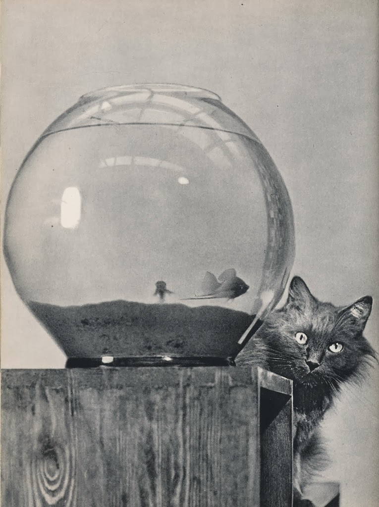 Vintage Photos Of Cats From The 1950 S Vintage Everyday