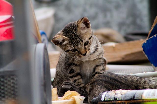 Manfaat Memelihara Kucing Menurut Agama Islam Hobinatang