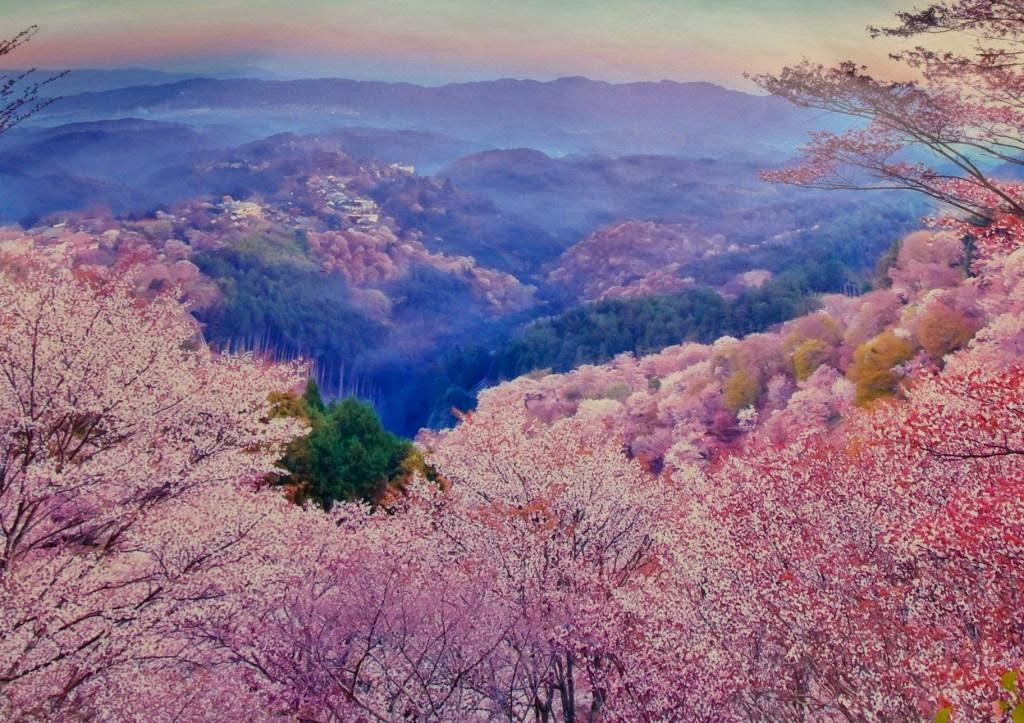 阿畢的天空: 奈良吉野山賞櫻