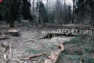 Щемыслица. Дубрава. Сломанное ураганом дерево