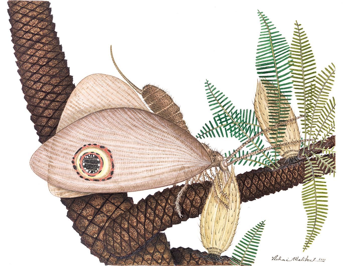 tywkiwdbi tai wiki widbee  jurassic lacewing vs modern butterfly