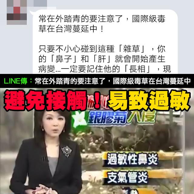 國際級毒草 銀膠菊 LINE 鼻子 肝 病變