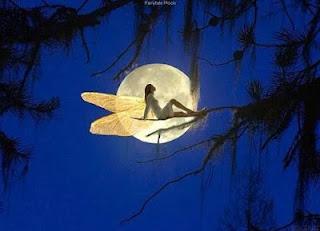 bài thơ về tiếng chim đêm