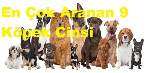 En Çok Aranan 9 Köpek Cinsi