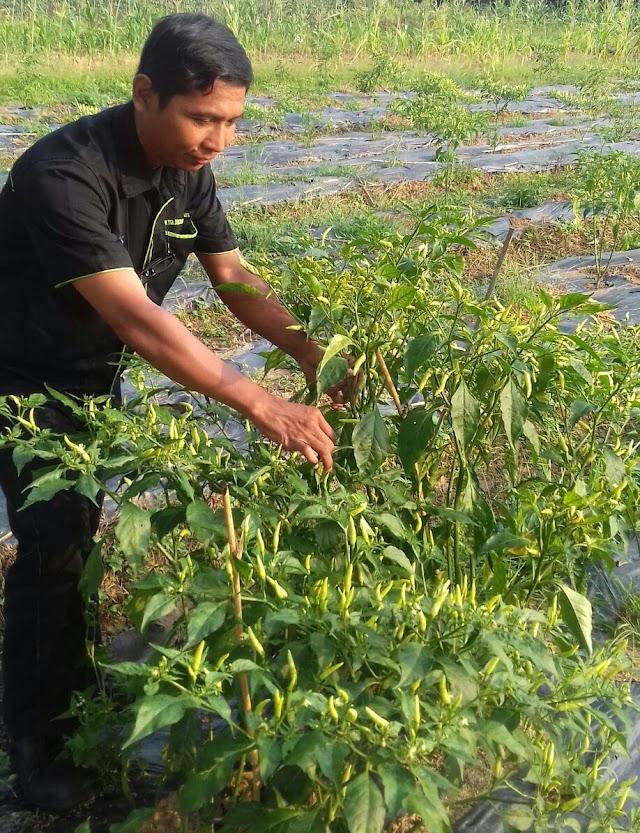 Yuk Bertani di Gunung Hambalang Bersama Alumni Fapet Unsoed
