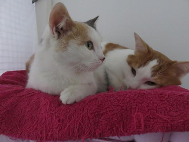 Photos de chatte vraiment serré