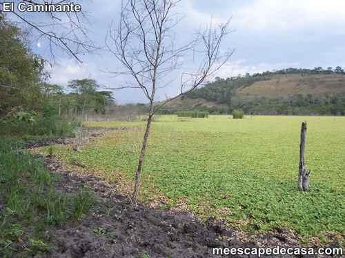 Laguna Ricuricocha (San Martín, Perú) - 3