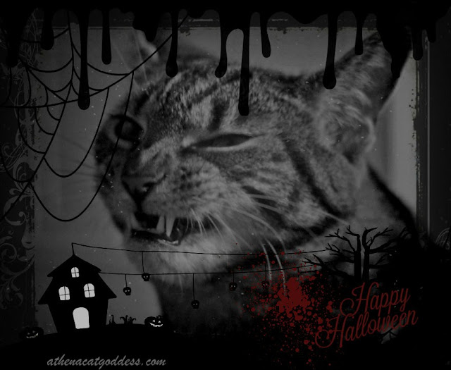Halloween cat graphic Vampire Cat