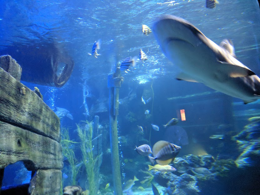 Visiting Alton Towers with Children who are 1.3m Tall - Itinerary & Tips  - Shark bait reef