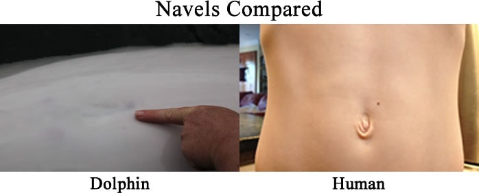 interesting navel facts