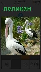 два пеликана стоят около воды склонив свои клювы