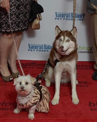 Red Carpet event prior to the Nose to Nose awards dinner at the BlogPaws Conference