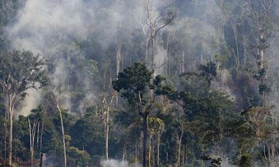 Cempaka South America: Brazil forms 'crisis cabinet ...