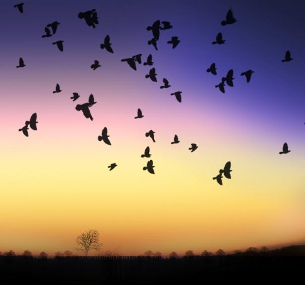 صور ومعلومات عن فن السلويت silhouette