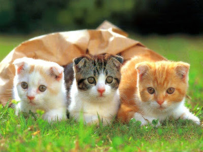 three-cat-sitting-on-the-grass-walls-imgs