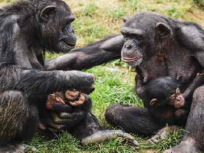 Pet Animals Name Ape