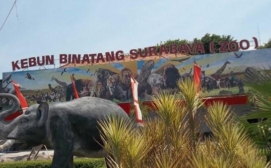 Pesona Keindahan Wisata Kebun Binatang Kbs Zoo Di Surabaya