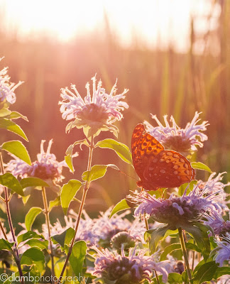 http://www.redbubble.com/people/dlamb/works/15819864-sunset-at-the-butterfly-garden