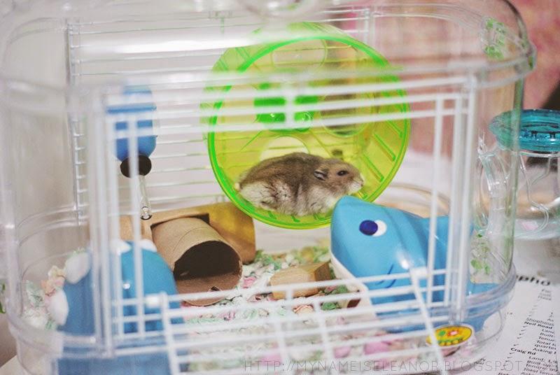 sand für hamster