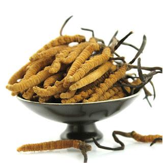 Obat Herbal Infeksi Tuba Falopi Non-Paten